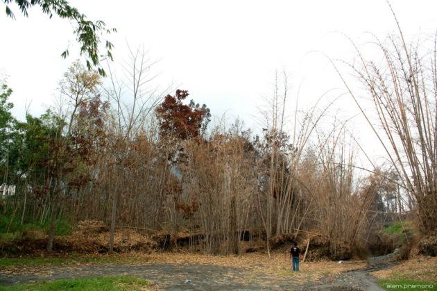 Kalikuning yard